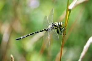 Close up picture of a dragonfly