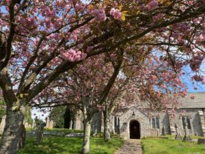 Holcombe Burnell Church with Blossom